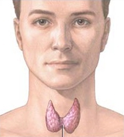 Thyroid Gland Location